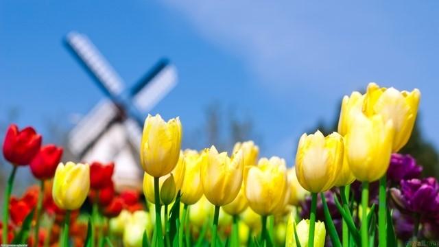 Kumpulkan Alfastamp, Ikuti Undian Royal VKB Berhadiah Liburan ke Belanda