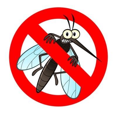 Cara Alami Mengusir Nyamuk Bandel dengan Mudah dan Cepat, dijamin Ampuh!
